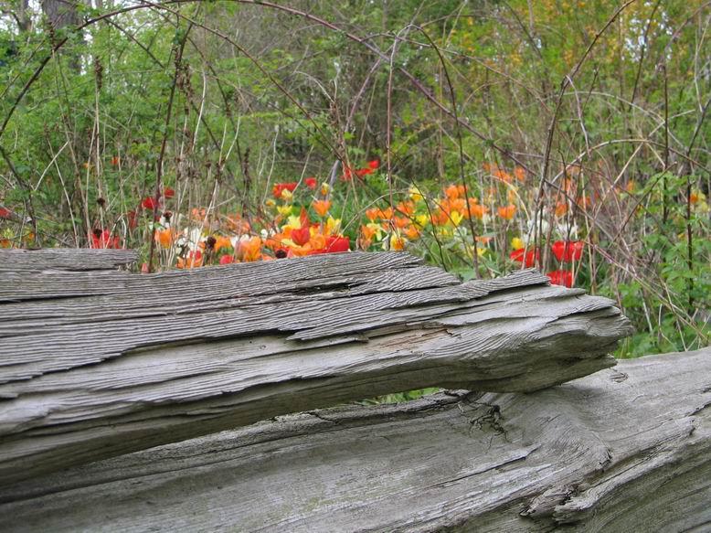 Flowers Riverdale Farm