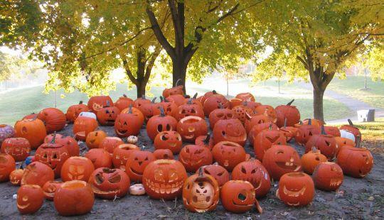Pumpkins in Christie Pits by Ulli Diemer