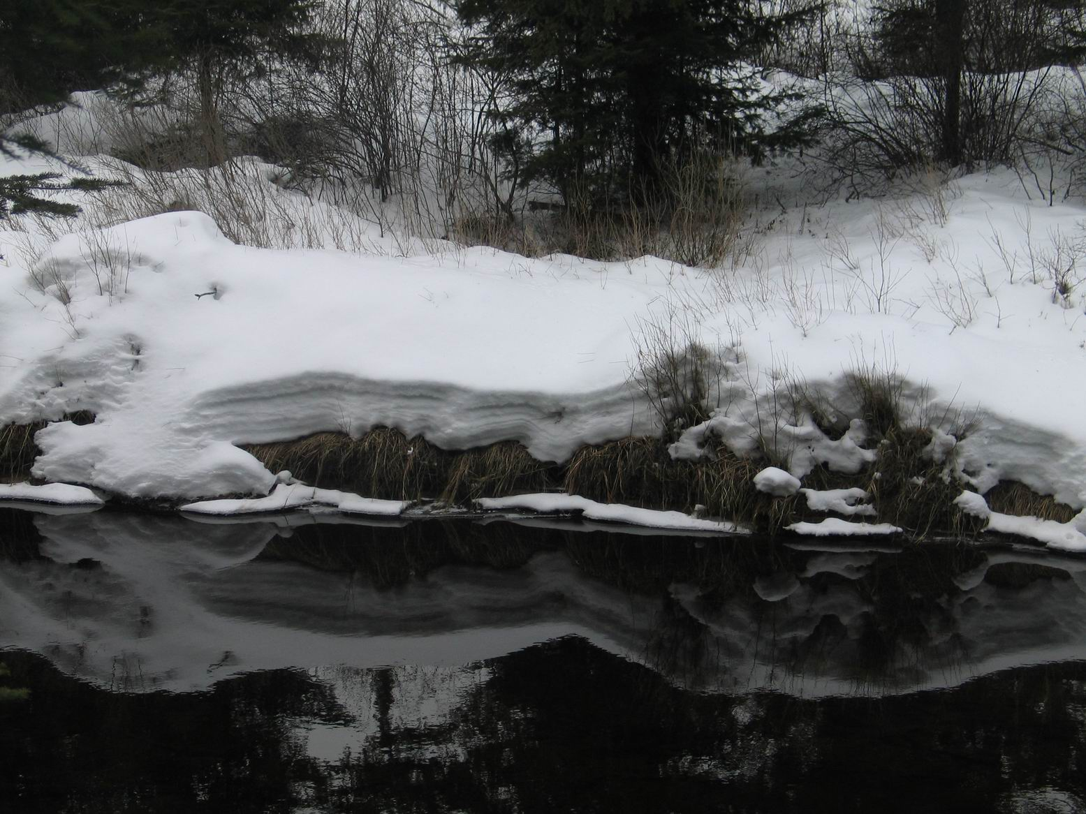 Algonquin, February 2012. Photo by Ulli Diemer.