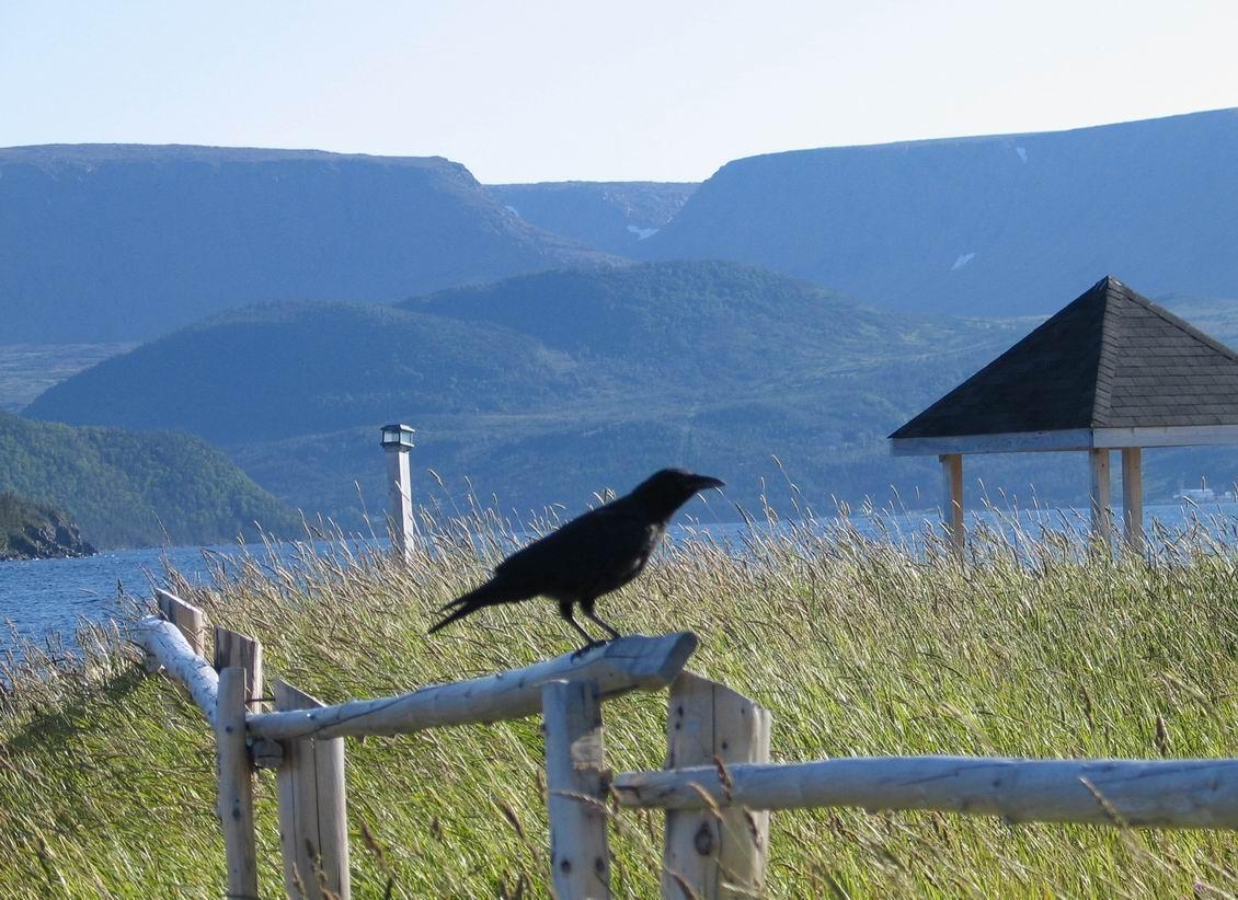 Raven, Noris Point